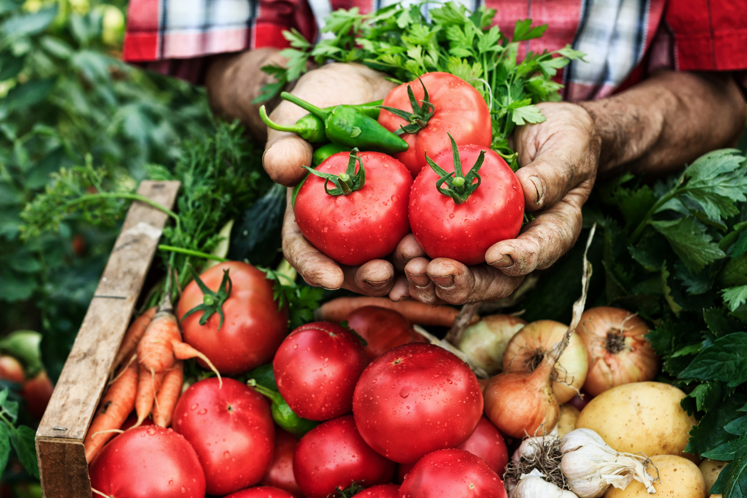 Tipy a zajímavosti / Jídelníček podporující očistu organismu je založený na lehké, dobře stravitelné a málo tučné stravě.